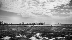 Dwingelderveld-18-4-2021-11-25-22