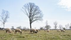 Dwingelderveld-18-4-2021-11-35-39