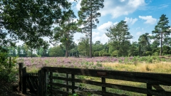 Heide-Veld-Schoonloo-16-8-2020-13-35-51