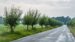 Wilge-bomen-NoordLaren-14-8-2020-07-47-43